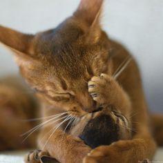 ahhh...my sweet thing...a kiss