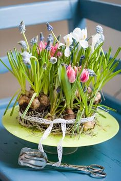 I do this every winter, just place the bulbs in a pretty glass container with water. & in 6-8 weeks, pretty spring flowers! Tiny Spring Container Garden