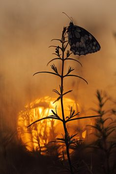 ☀Rising sun by Christian Rey on 500px**