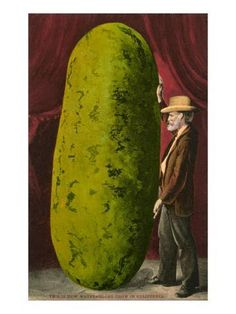 """520 - """"This Is How Watermelons Grow In California."""" A great exaggeration postcard by Edward Mitchell. Fruit And Veg, Fruits And Veggies, Funny Vegetables, Watermelon Art, Mouth Watering Food, Garden Show, Vintage Postcards, Vintage Photos, Vintage Prints"""