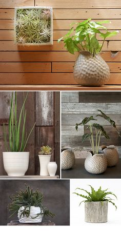 Flora Grubb has amazing plant containers