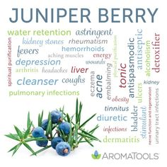 Essential Oil Spotlight: Juniper Berry - Health and wellness: What comes naturally Juniper Berry Essential Oil, Essential Oils Guide, Lemon Essential Oils, Essential Oil Uses, Natural Essential Oils, Young Living Essential Oils, Aroma Tools, Juniper Berry Oil, Spot Lights