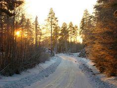 Midday in December, outside Skellefteå, Sweden.