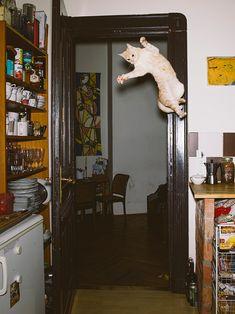 Fear of flying, Daniel Gebhart de Koekkoek
