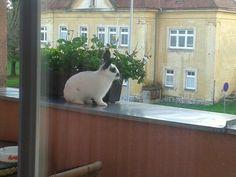 Nám naleze na okno kočka ale králík