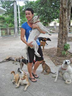 Project #Streetdogs Hua Hin, #Thailand by Jane Key #dogs