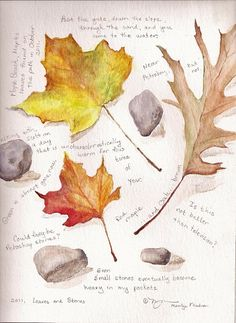 Leaves and Stones, a watercolor and graphite painting