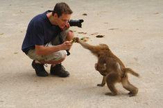 Chiang Rai, Thailand - Monkey Temple (Wat Tham Phra) - Macaques #Monkeybusiness #monkey #temple #thailand #chiangrai #travel #travelphoto #nature #NaturePhotography #wildlife #wildlifephotography #naturaleza #vacation #viajes #voyaes #reisen #reizen #outdoor #adventure #traveladdict #musttravel #wanderlust #vacation