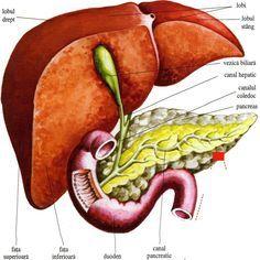 cum să-ți pierzi intestinul gras