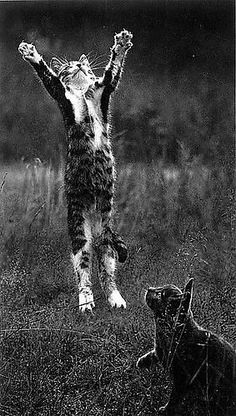 Kittens (by Pentti Sammallahti) Cool Cats, I Love Cats, Funny Cats, Funny Animals, Cute Animals, Crazy Cat Lady, Crazy Cats, Animal Gato, Gatos Cats