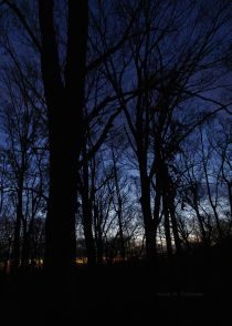 My Cobalt Twilight photo print is in my Etsy Shop: Sunset - Cobalt Sunset - Blue Sunset - Twilight - Dark Woods - Woodland - Color Photograph - Nature - Nature Art - Woodland Wall Decor