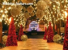 Madeira gardens are an amazing place to visit during festive season.If you wish to visit the gardens find more details here:  http://madeira-seekers.com