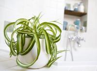 6 plantes pour votre salle de bain (Fiches conseils)