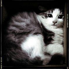 The Cat in the Box / Gandalf [human flatmate: Maria Elena]