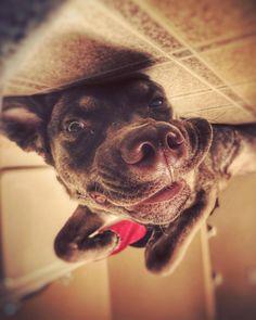 Hello Reddit.   http://ift.tt/2o75BG7 via /r/dogpictures http://ift.tt/2o6ZtO5  #lovabledogsaroundtheworld