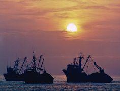 Pesqueros al ancla en el puerto de Tocopilla.