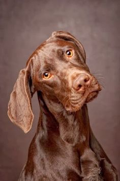 10 fun facts about dogs, interesting facts to know for everyone :)