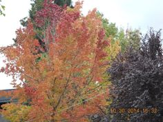The colors of fall!