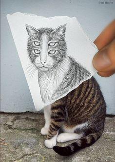 gatto singolare