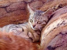 FeLicks the rescue kitty in dreamland