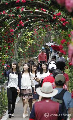 Rose Tunnel in a park in Seoul, #Korea