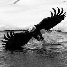 Great Great pictures of Adler Great great pictures of Adler Wira F. animals Great Great pictures of Adler Wira F. Great Great pictures of Adler Gr Pretty Birds, Beautiful Birds, Animals Beautiful, Nature Animals, Animals And Pets, Wildlife Nature, Wild Animals, Funny Animals, Photo Animaliere