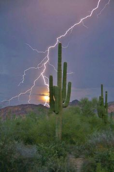 Lightning and sunset! By Richard Grzych! All Nature, Science And Nature, Amazing Nature, Tornados, Thunderstorms, Beautiful Landscapes, Beautiful Images, Desert Art, Desert Life