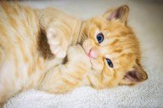 Kitten Photos Set of 3 Photo Cards by SoulCenteredPhotoart on Etsy