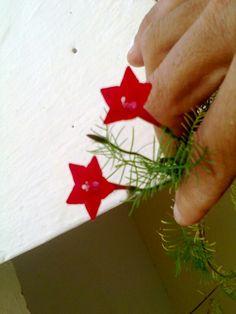 Sara said plantas e cactos 2