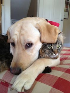 More Cat and Dog Cuddles cuddles cute dogs pictures images puppies pets animals Kittens Cutest, Cats And Kittens, Cute Cats, Baby Animals, Funny Animals, Cute Animals, Cat Hug, Dog Cat, Raining Cats And Dogs
