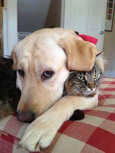 buddies...