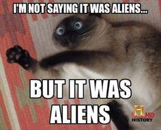 Aliens cat