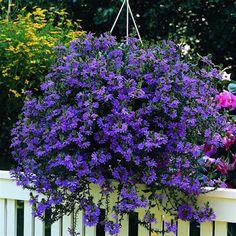 Pátio das Flores: Flor canhota, amor à primeira vista !!!