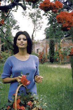 #SophiaLoren #1964