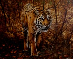 Bengal Prince Original Oil  Available here in the North East Art Collective Eldon Garden Newcastle