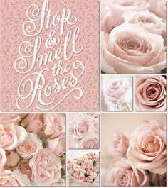 moodboard pink roses by AT