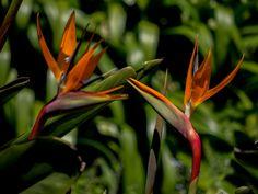 Prächtige Sundavilla | Mediterrane Pflanzen | Pinterest Tipps Pflege Pflanzen Wintergarten