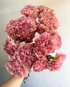 Little Flowers, My Flower, Colorful Flowers, Flower Art, Flower Power, Beautiful Flowers, Bloom Baby, Luxury Flowers, Flower Aesthetic
