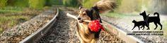 Rescueyhdistys KULKURIT – Matkalla kotiin! Pet Organization, Volunteer Work, How To Raise Money, Rescue Dogs, Romania, Homes, Animals, Houses, Animaux