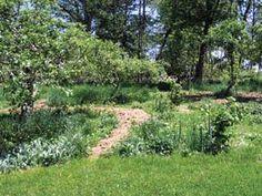 Plant an Edible Forest Garden