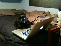 This cat who found your browser history. | 31 Cats Who Have Seen Things You Wouldn't Believe