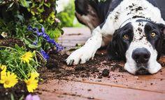 So wird Ihr Garten zum Hunde-Paradies