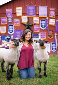 Sure Champ Senior Photos: Show Lambs
