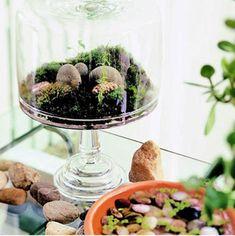 terrarium ideas : cake stands, lamps, necklace, ornaments..