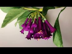 ABC TV | How To Make Iochroma Cyaneum Paper Flower From Crepe Paper - Cr...