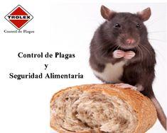 Para la industria de los alimentos de hoy en día hay un componente para garantizar la seguridad alimentaria que no se puede obviar: Manejo integrado de plagas.