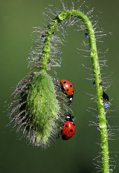Ladybugs...my favorite.