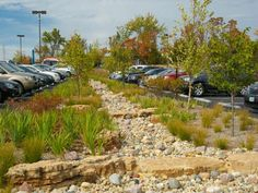 Novus Intern'l HQ Campus | St. Charles, Missouri | SWT Design | The vegetated bioswale in the employee parking lot. The Novus Headquarters received 3 of 4 stars from Sustainable Sites Initiative pilot program.