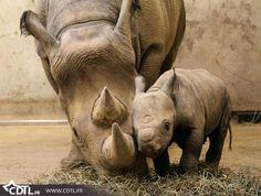 Bébés animaux rhinocéros
