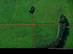 Tea cultivation in Corrientes province, Argentina. By Yann Arthus Bertrand Cool Pictures, Cool Photos, Amazing Photos, Arthus Bertrand, Drones, Photos Of Eyes, No Photoshop, Birds Eye View, Nature Photography